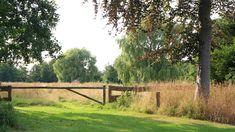 Het gras en de bloeiende kruiden van het weiland hoogzomer gemaaid en volgens traditie gebruikt als natuurlijk paardenvoer.