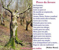 """21 de Setembro - Dia da Árvore  """"Prece da Árvore"""" e outras mensagens, no nosso blog."""