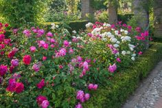 Tips For Designing a Beautiful Rose Bed --> http://www.hgtvgardens.com/roses/how-to-design-a-rose-bed?soc=pinterest