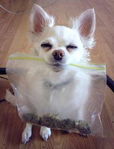 Ganja pup lol i prolly would be laughin so hard i couldn't even grab the bag ahaha