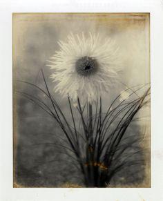 Leeza Taylor #Polaroid Photo