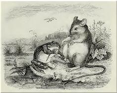 Fabel: Der Frosch, die Ratte und die Weihe - Streit