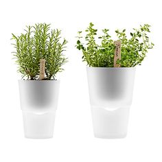 Buy Eva Solo Self Watering Herb Pots Online at johnlewis.com