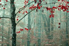 red flowered tree in woods