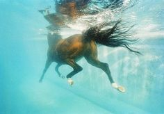 Winding Wadi, an Arabian racehorse, works out in a pool in Dubai. Swimming is part of routine training and is vital to rehabilitating injured horses.