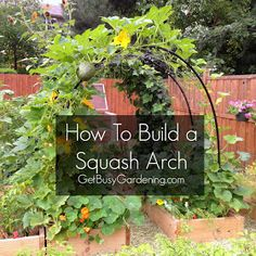 This would be helpful for our crazy squash plants we always have that take over everything! How To Build a Squash Arch