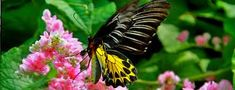 A few short notes on tropical butterflies phuket butterfly farm Plants That Like Shade, Phuket City, Garden Insects, Foundation Planting, Butterfly Pictures, Tall Plants, Different Plants, Plant Needs, Tropical Garden
