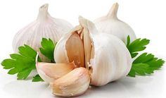 Garlic | Healing Herbs And Spices To Grow In Your Garden