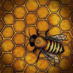The Honey Bee by a.miller ~ Look to the hard-working honey bee for guidance on how to live your life. Bee Honeycomb, Honeycomb Tattoo, Bee Images, Buzzy Bee, Bee Skep, Bee Hives, I Love Bees, Bee Art, Guache