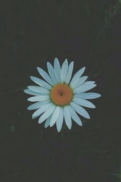 Find images and videos about white, grunge and flowers on We Heart It - the app to get lost in what you love. Hipster Photography, Vintage Photography, Love Photography, Photography Essentials, Photography Flowers, Tumblr Backgrounds, Tumblr Wallpaper, Iphone Backgrounds, Iphone Wallpapers