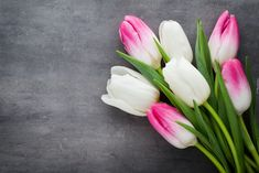 Kwiaty, Biało-różowe, Tulipany