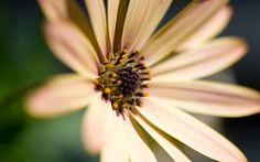 60 Beautiful #FlowersWallpapers [Wallpaper Wednesday]  Close Flower  #FondoDeEscritorioFloral