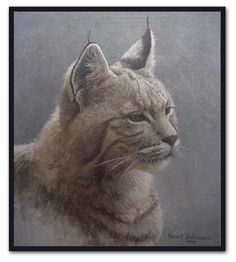 """""""Bob Cat"""" by Robert Bateman:born in Toronot now lives on Salt Springs Island, a Canadian artist and environmentalist, famous for his wildlife paintings"""