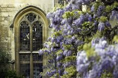 The Little Hermitage - beautifuloxford: Balliol College, Oxford-Arched. Through The Window, Through The Looking Glass, Balliol College, Harewood House, Oxford England, Europe, Arched Windows, Zoom Photo, Fantasy Inspiration