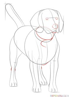How to draw a beagle | Step by step Drawing tutorials