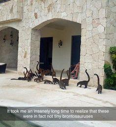 Hahahahahah Tiny brontosaurus