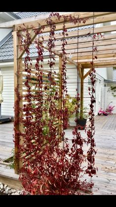 Klättervildvin mot armeringsnät i en pergola - Garden Design Ideas 2019 Pergola Garden, Garden Trellis, Backyard, Pergola Kits, Outdoor Spaces, Outdoor Living, Outdoor Decor, Planter Beds, House Deck