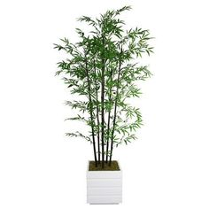 Laura Ashley Home Tall Bamboo Tree in Planter Base Color: White, Bamboo Color: Black