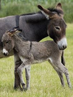 Mother donkey with her baby