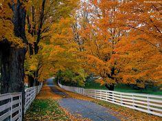 I got: Autumn/ Fall ! What Season Are You Like?