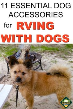 We love enjoying RVing with our dog, it's one of the best things about RVing - that she gets to come along. It's important when you are bringing your dog  RV camping with you that you have the essential dog accessories .  These are the top essential dog accessories for all dog owners when you are RV camping, we've included some pet safety tips also.  #rvingwithdogs #rvcamping Rv Camping Tips, Camping Must Haves, Camping Set, Camping Dogs, Camping With Kids, Family Camping, Backpacking Tent, Women Camping, Rv Tips