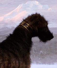 #Irish wolfhound#mythic#mountain, snowcapped#Irish#mystique#solitary#Celtic#collar#swirls#magic#fierce