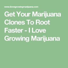 Get Your Marijuana Clones To Root Faster - I Love Growing Marijuana