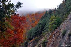 Bosc de Santa Fé