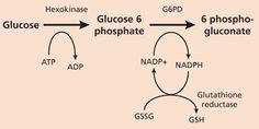 Diagnosis and Management of G6PD Deficiency - October 1, 2005 - American Family Physician