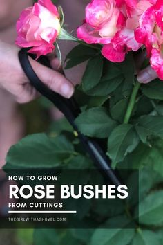 Are you looking to save that beautiful rose bush?! Or maybe you love your friend's roses! Find out how to grow your own roses from clippings! Grow Roses from Clippings | How to Grow Roses from Clippings | Can you Grow Roses from Clippings | #propagation #gardenrose Outdoor Shade, Outdoor Plants, Outdoor Landscaping, Landscaping Tips, Wilted Rose, Rose Cuttings, Plant Propagation, Full Sun Plants, Apartment Plants