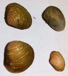 Passaparolablog: Trovata specie aliena sul Fiume Serchio Lucca