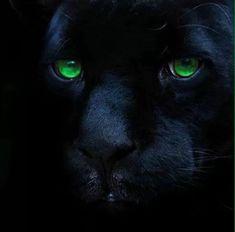 Panther Animals Images, Animals And Pets, Animals Beautiful, Panther, Wildlife, Gifs, Amazing, Paisajes, Wild Animals