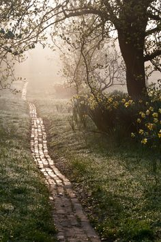 Path at Sunrise. Picture: Carol Casselden, International Garden Photographer of the YearOrchard Path at Sunrise. Picture: Carol Casselden, International Garden Photographer of the Year All Nature, Jolie Photo, Garden Care, Dream Garden, Pathways, Garden Paths, Garden Inspiration, The Great Outdoors, Beautiful Gardens