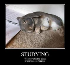 What studying actually causes…