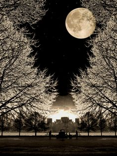 Full Moon over snowy trees.
