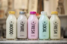 Shatto Milk Co. - a great family outing to a local dairy farm that produces super yummy flavored milk like root beer, cookies 'n cream and cotton candy. www.crowleyfurniture.com