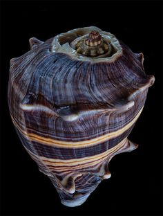 Awe-Inspiring Seashell Photos by Bill Gracey