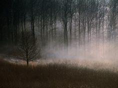 Appreciation for the creepier scenes in nature haha