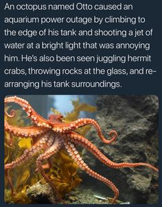 An Octopus Named Otto Caused An Aquarium Power… Nature Animals, Animals And Pets, Funny Animals, Cute Animals, Wtf Fun Facts, Funny Facts, Random Facts, Octopus Art, Animals