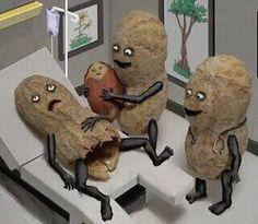 peanut birth