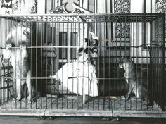 Adgie the Lion Tamer, 1897