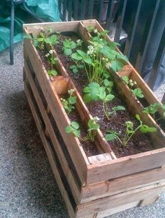 New Video Tutorial: How to Make a Strawberry Pallet Planter ~ Lovely Greens