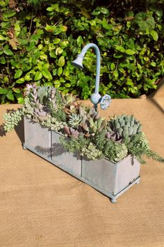 Succulents in container with faucet. LaurasLittleGardens.com