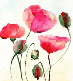 Descargar - Ilustración estilizadas flores de amapola — Imagen de stock #13753107