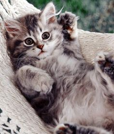 15 best cats hd images on pinterest cats funny cats and i love cats