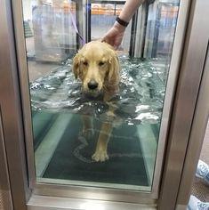 Golden Retriever Rescue Resource - Adopt A Golden Retriever Rescue Dogs, Animals, Animales, Animaux, Animal Memes, Animal, Pet Dogs, Dog, Animais