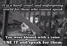 We Must Speak For Them! We Are Their Voice!