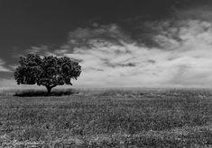 E tudo o vento levou by José Carlos Teixeira - Photography © on 500px