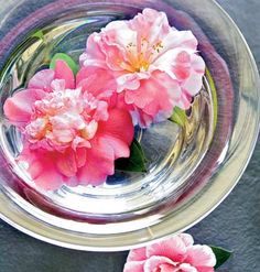 pretty camellias floating in a glass bowl