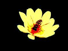 Ape su fiore (2008)
